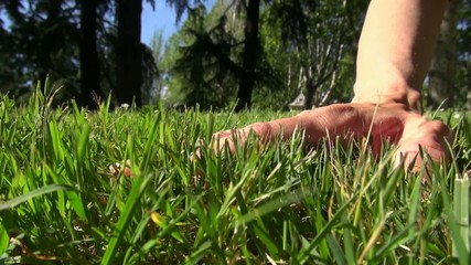 caressing grass