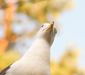 Seagull staring downwards