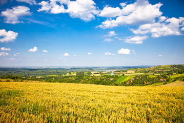 Panoramic view  on a golden wheat field of Vojvodina , Serbia.
