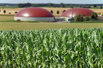 Biogasanlage und Maisfeld