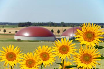 Biogasanlage und Sonnenblumen