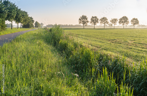 Rural landscape in early morning light