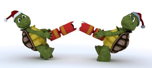 tortoise pulling christmas cracker