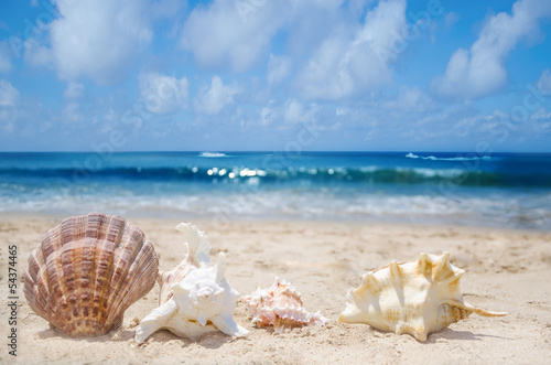 Seashells on a beach