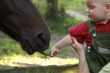 Junge füttert ein Pferd