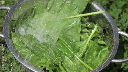 Washing spinach leaves