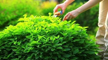Young woman cutting bushes.
