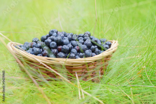 Black berries in the basket