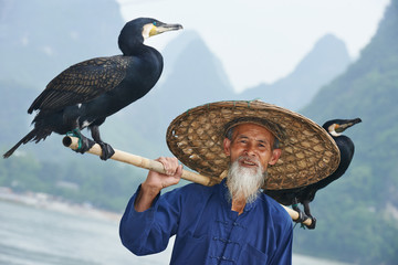 Chinese old person with cormorant for fishing