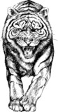 hand drawn tiger