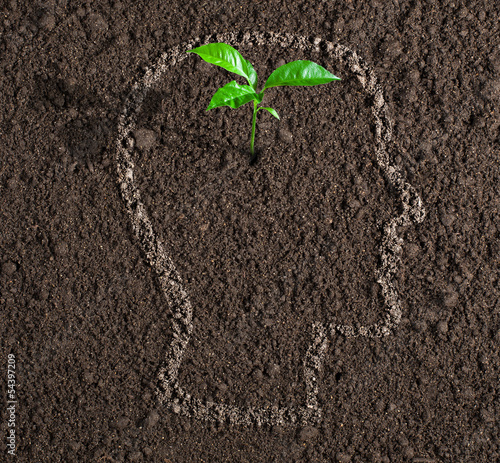 young growth of idea inside of human head contour on soil concep