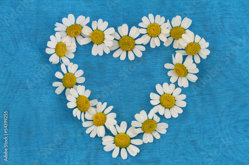 Heart made of chamomile flowers on blue background