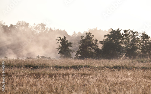 morning fog over meadow © Olha Rohulya