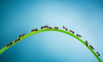 Team of ants.