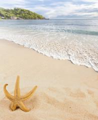 étoile de mer sur plage des Seychelles