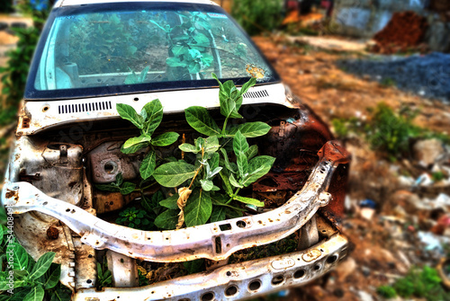Weed Growth in a Car
