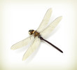 Dragonfly, realistic
