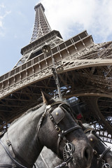 horses under the tour eiffel