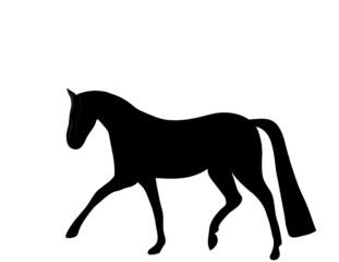 Dressagehorse