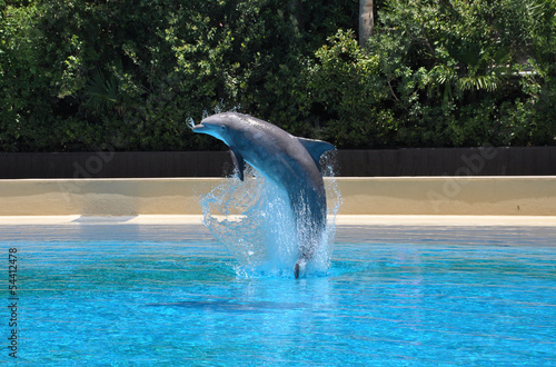 Dolphin jumping out of pool