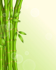 Vector illustration of Background with green bamboo