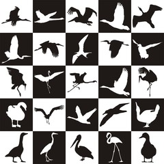 Black and white background with aquatic birds