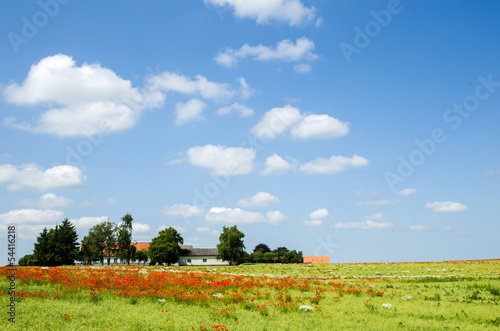 Danish countryside view