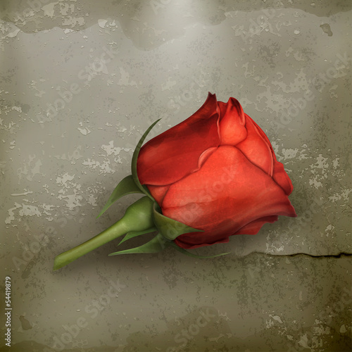 Red rose old - 54419879