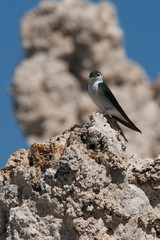 Bird on rock formations