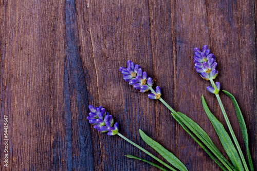 branches of a lavender
