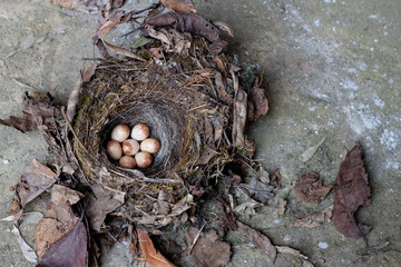 sparrow eggs in a bird nest