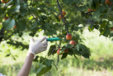 pesticide injected in a fruit poster