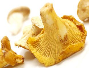 chantarelles on a white background with shadow