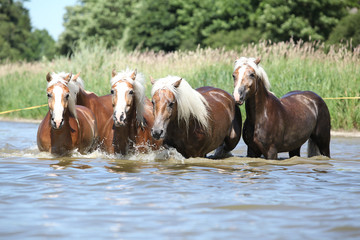 Batch of chestnut horses running in the wather