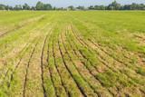 Grassland after fertilizing with a manure injector machine