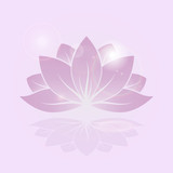 lotus shine flower