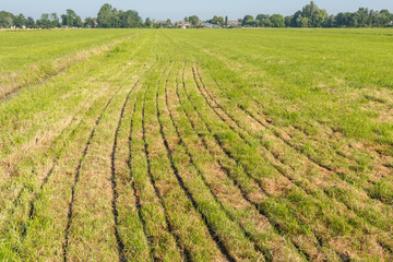 Grassland after fertilizing with a manure injector machine