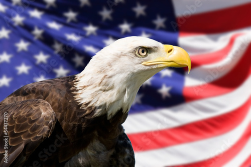Foto op Canvas Eagle Bald Eagle