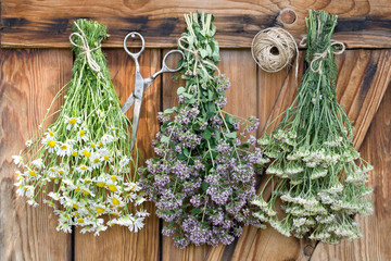 Freshly harvested herbs hanging and drying