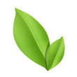 Green leaves isolated on white. Vector design.