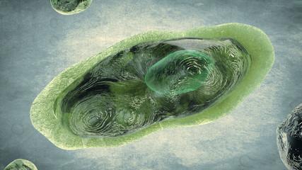 Organismo vivo - Pandoravirus -