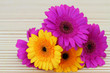 Colorful gerbera daisies with copy space