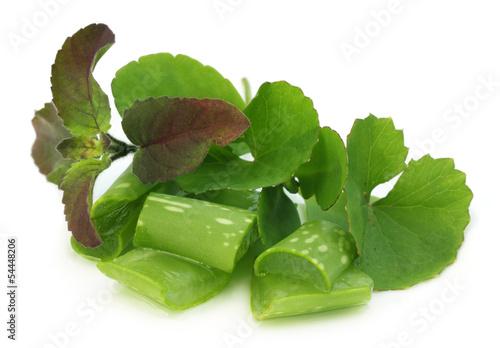 Medicinal herbs – aloe, tulsi, thankuni