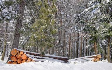 foret vosgienne sous la neige