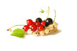 Three varieties of currants on a white background