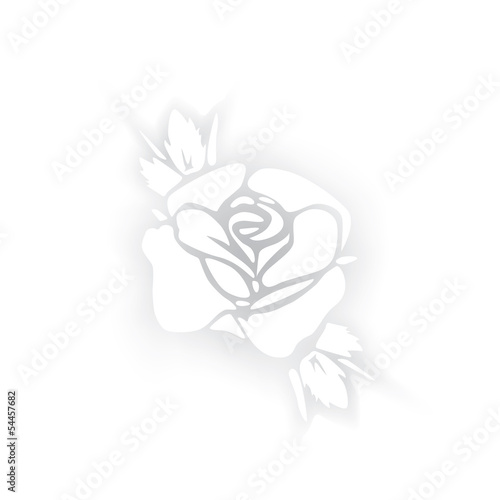 White rose silhouette with shadows on white background.