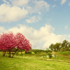 Landscape with blossom tree and lake over blue sky