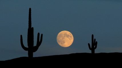 Arizona Saguaro moonrise