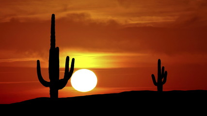 Arizona Saguaro sunrise