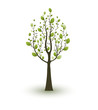 Single green tree on white background.